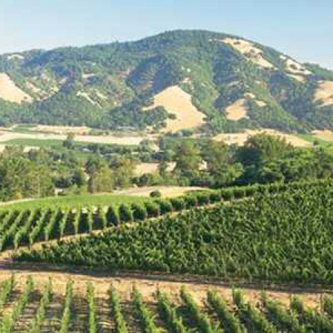 Will the fires last Fall in California's wine country cause prices to rise?