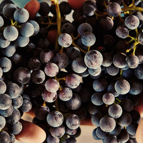 Why Do We Focus On California Wines?