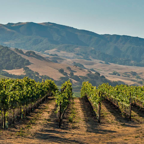 Central Coast wine country: Underrated, top wine destination, too good to pass up